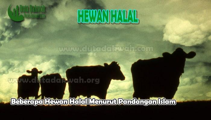 Beberapa Hewan Halal Menurut Pandangan Islam