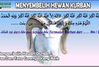 Menyembelih Hewan Qurban Doa Dan Tata Caranya Yang Baik